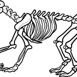 268x268 Dog Skeleton Coloring
