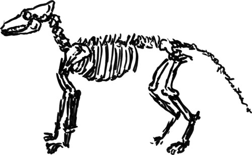 500x309 Drawing A Dog Skeleton So Much To Do, So Little Time