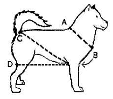Dog Sled Drawing