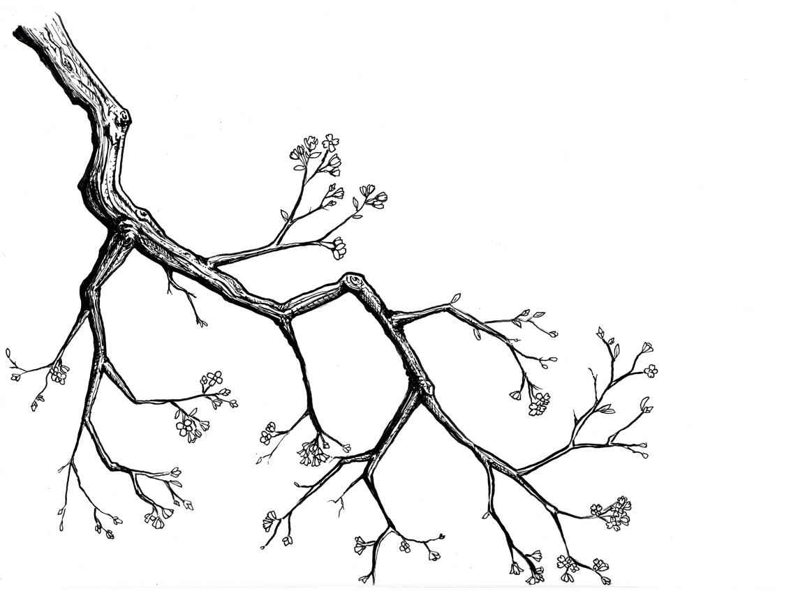 1153x847 Dogwood Pencil Drawing