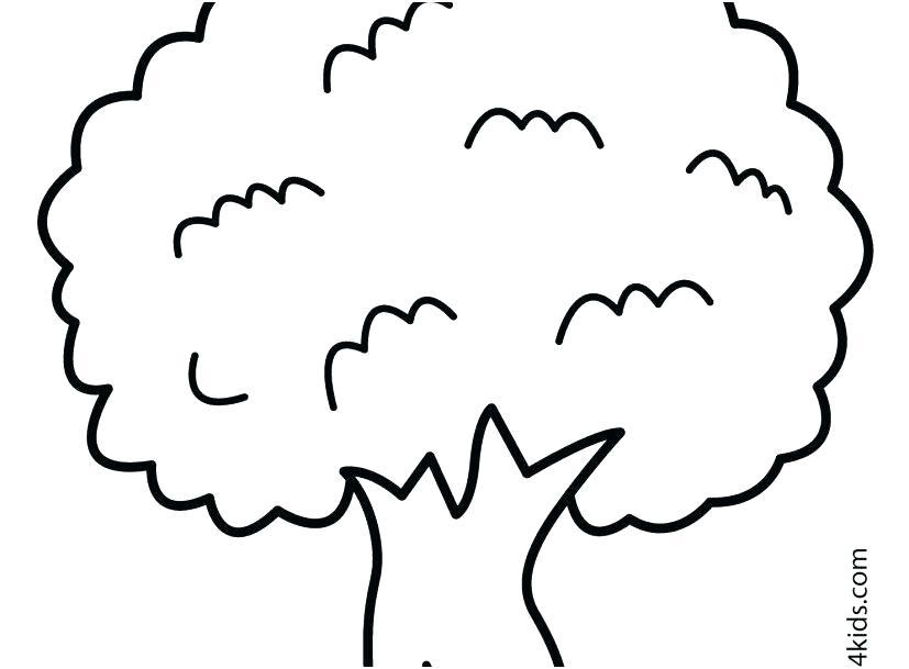 827x609 Dogwood Tree Coloring