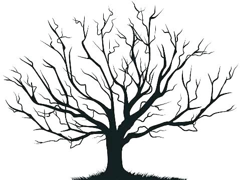 479x360 Drawing Family Tree Coloring Pages In Images With Coloring Tree