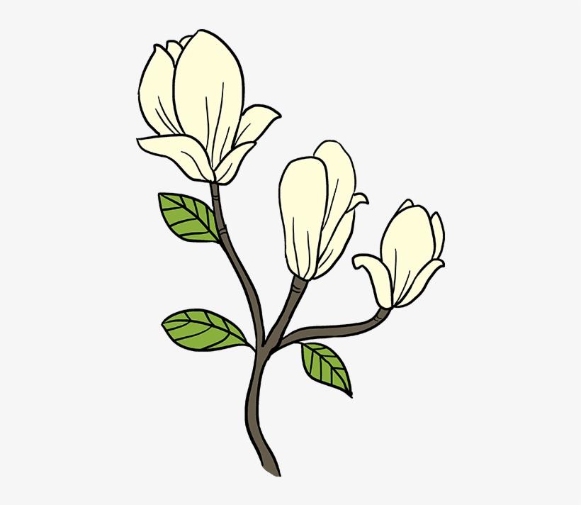 820x712 How To Draw Magnolia Flower