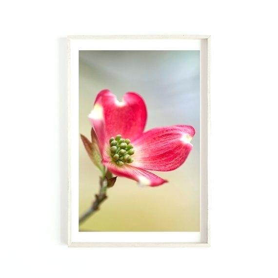 570x570 Pink Dogwood Flower Tree Blooming With Flowers Images Tattoo