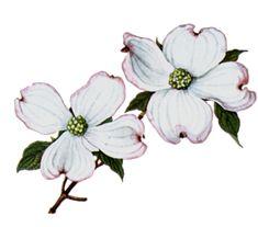 235x207 Best Dogwood Flower Tattoos Images Dogwood Flowers, Dogwood