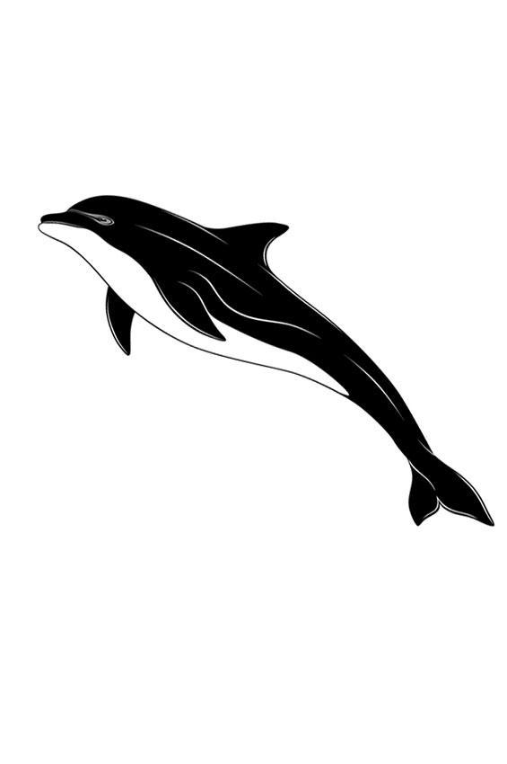 565x850 Download Tattoo Ideas Dolphin