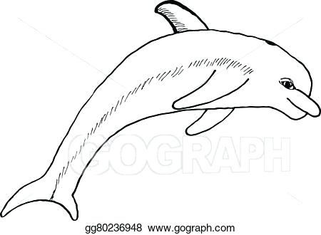 450x330 How Do You Draw A Dolphin
