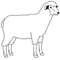 Domestic Animals Drawing Pictures