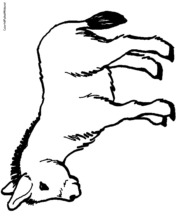 600x756 Donkey Coloring Pages