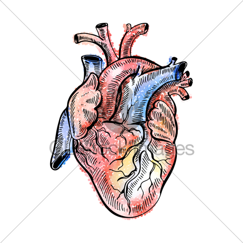 500x500 Hand Drawing Sketch Anatomical Heart Doodle Zentangle Ve Gl