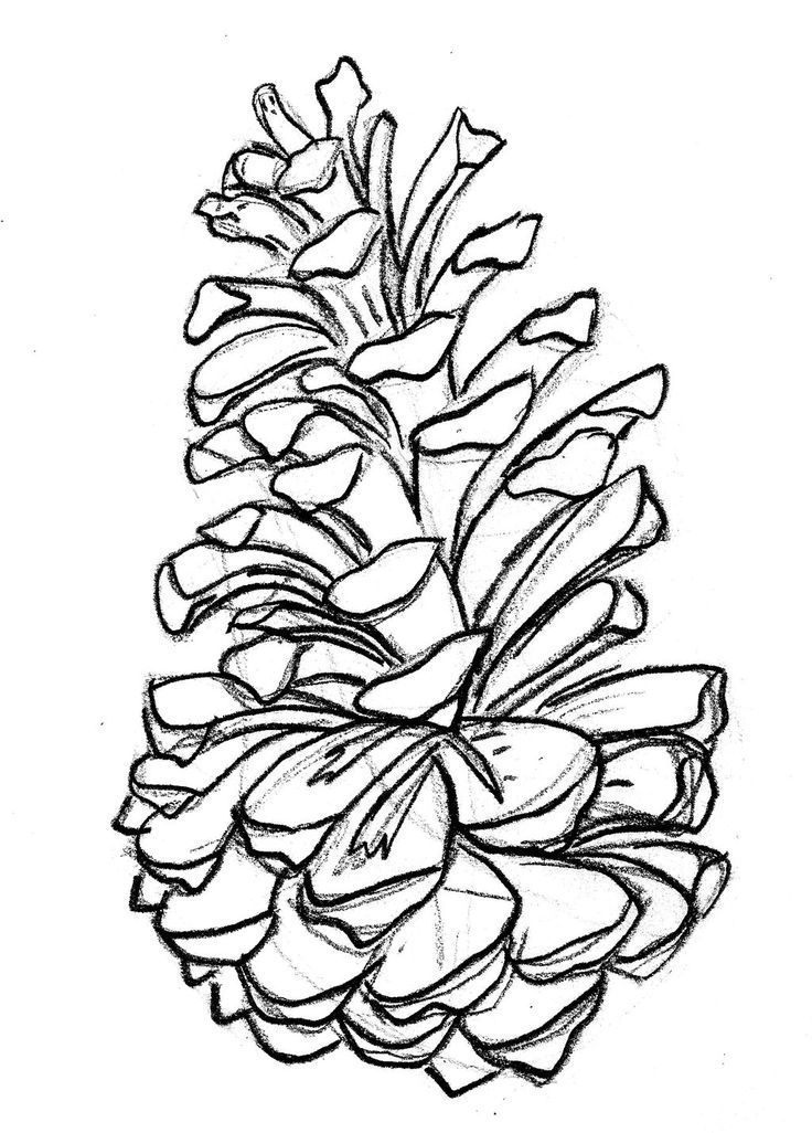 736x1026 pine tattoo pine cones, pine and branches nature