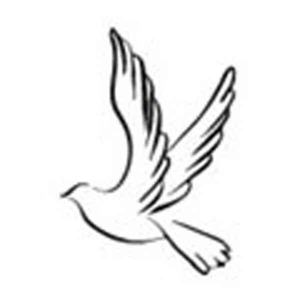600x600 hope dove symbol of hope dove a true symbol of peace