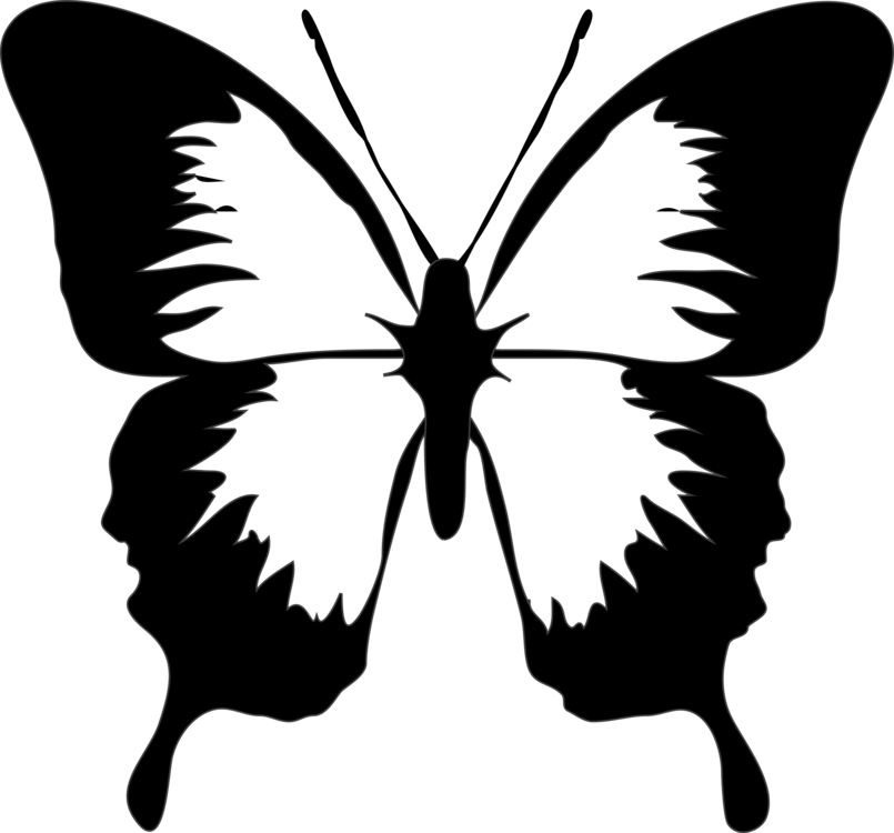 805x750 Drawing Clip Butterfly Transparent Png Clipart Free Download
