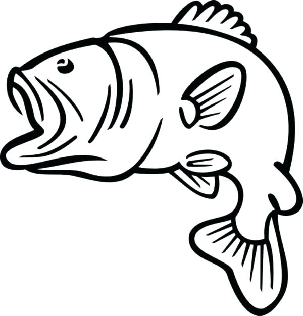 600x626 Fish Outline Drawing Fish Outline Images Free Download Best