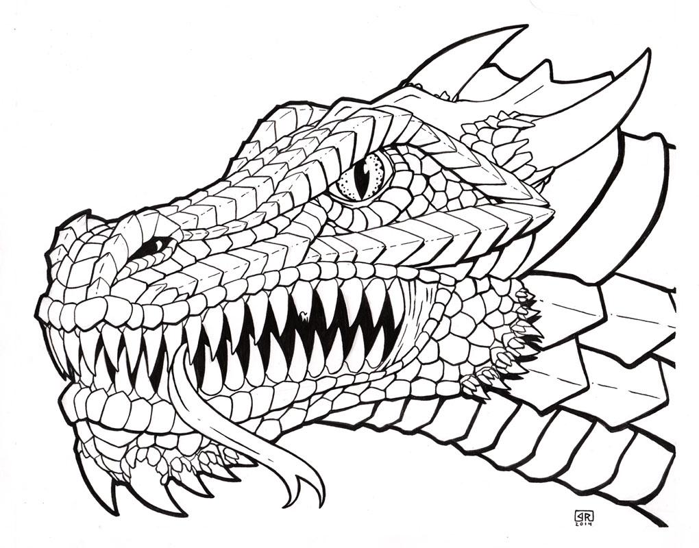1020x800 Dragon Line Drawing Line Drawing Dragons At Getdrawings Free