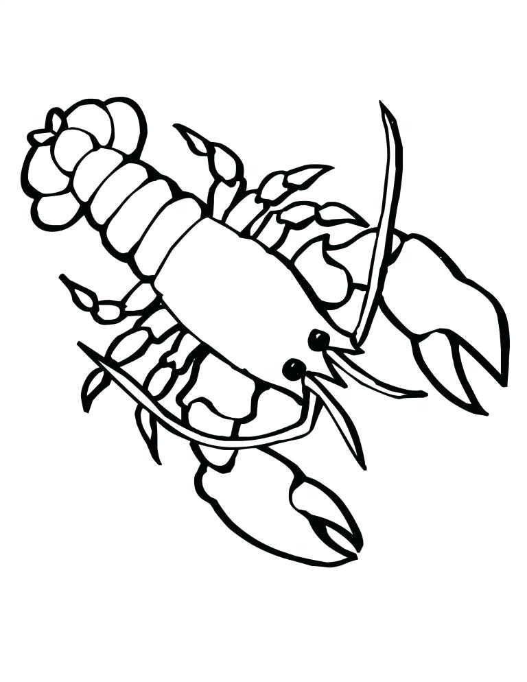768x994 Drawing Of A Lobster