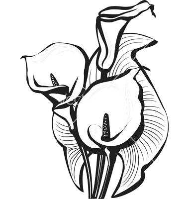 380x400 calla lily sketch lily flower clip art library calla lily flower