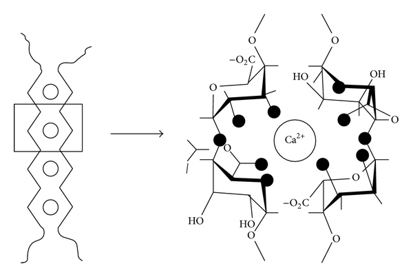 600x402 Alginate Particles As Platform For Drug Delivery