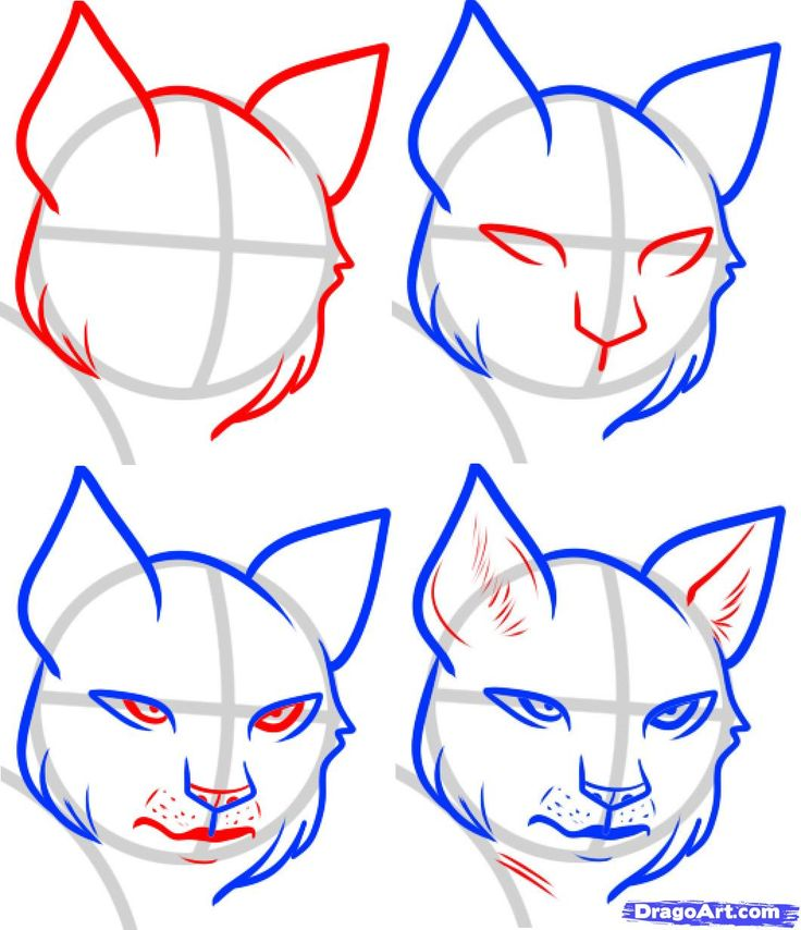 736x854 how to draw a wildcat face wildcat outline clip art at clker