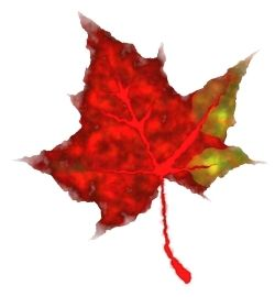 250x270 How To Draw Fall Leaves In Inkscape Hubpages