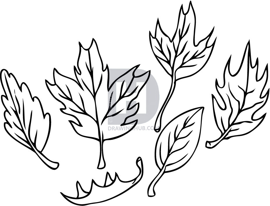 928x706 How To Draw Leaves, Step