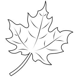 260x260 Learn How To Draw A Leaf, One Of The Maple Variety