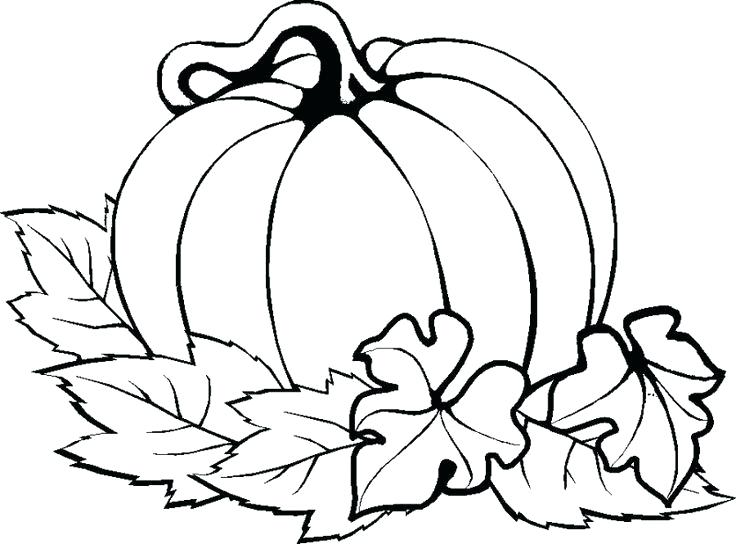 736x544 Pumpkin Drawings Image Pumpkin Drawings Step