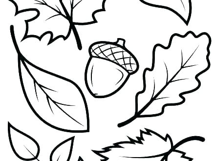 440x330 Drawing Fall Leaves