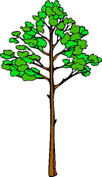 339x589 Family Tree Clipart Archives