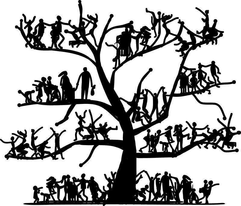 800x684 Family Tree Clipart Sketch Tree People