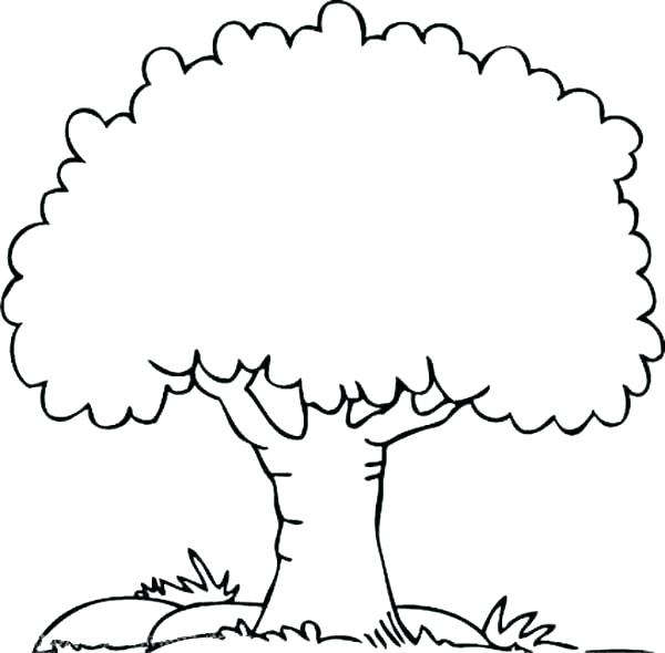 600x590 Free Family Tree Coloring Pages Drawing At For Personal Use