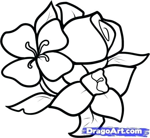 520x480 Flowers To Draw For Beginners Below Eye Level The Art