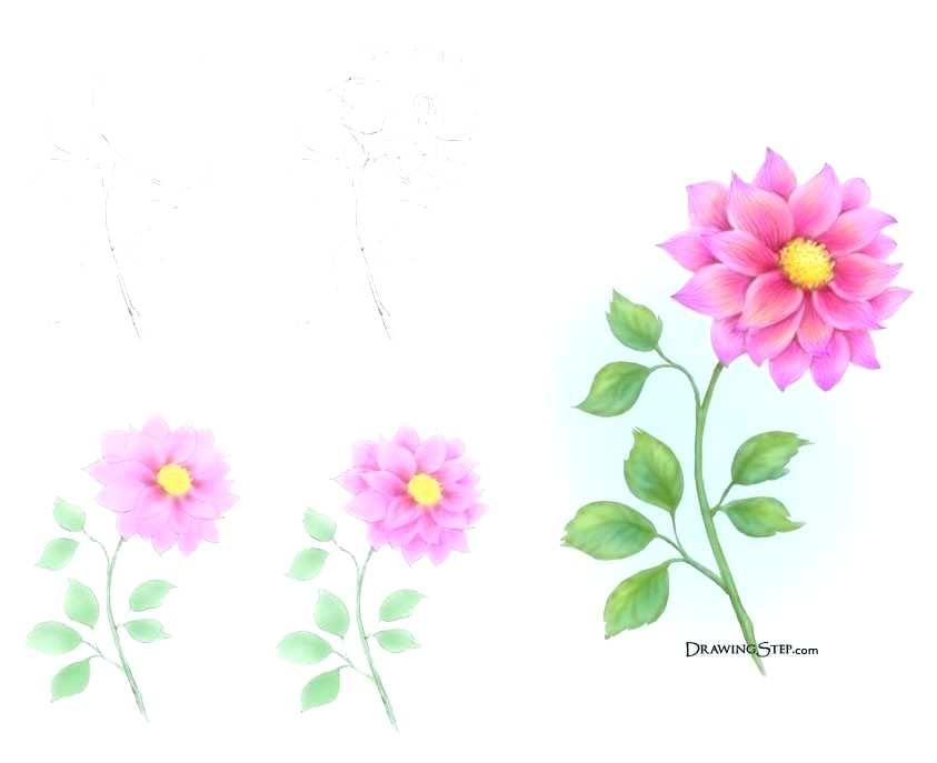 843x687 Draw Beautiful Flowers Drawing In Color Beautiful Flower Drawings