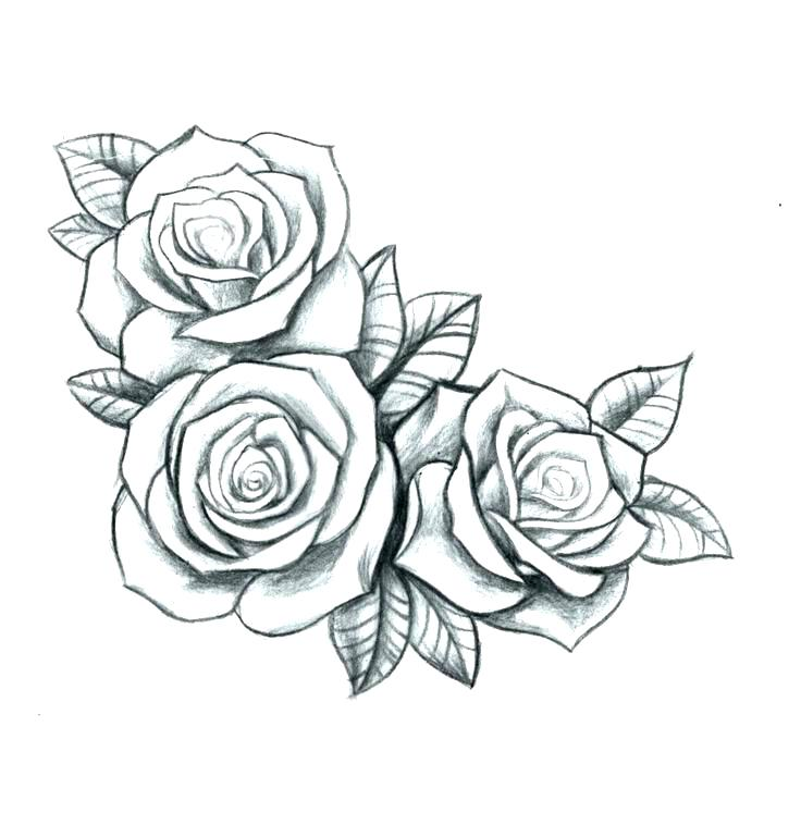 736x758 Roses Tattoo Outline Simple Rose Outline Drawing Free Coloring