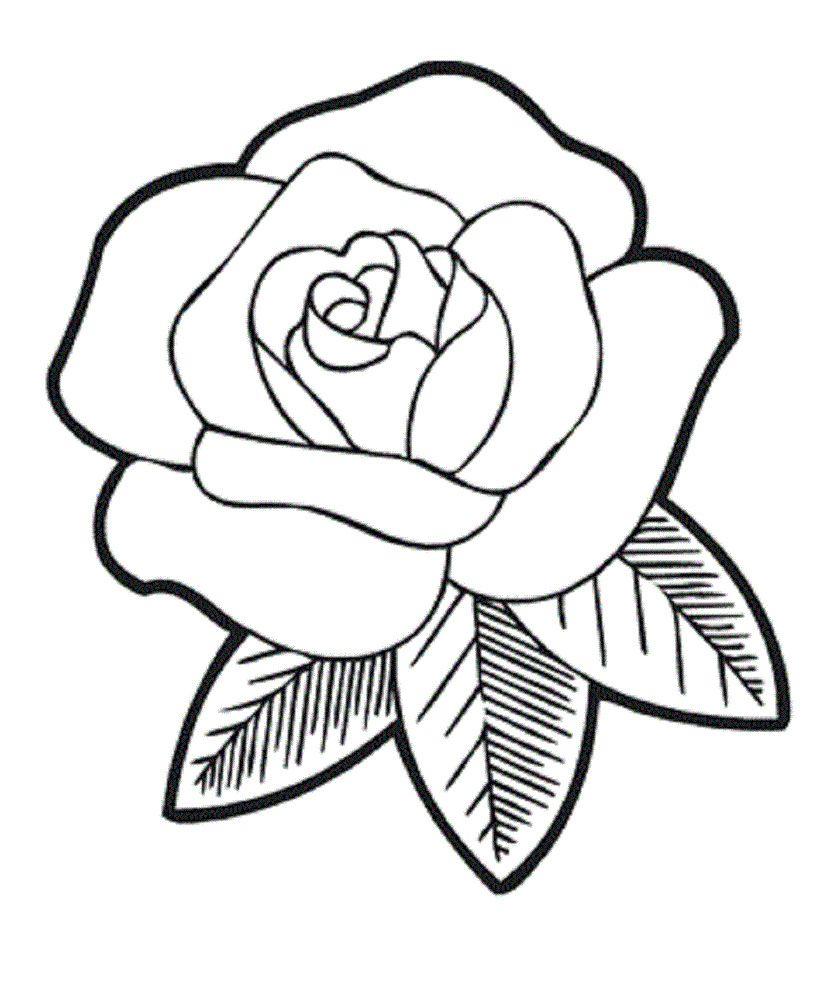 837x992 easy art sketches of flowers simple rose flower drawings beginners