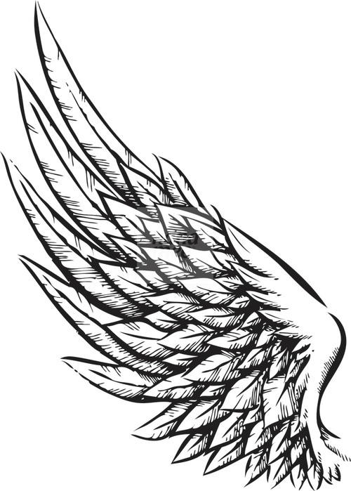 500x699 Drawing Wings