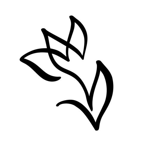 490x490 Tulip Flower Continuous Line Hand Drawing Calligraphic Vector
