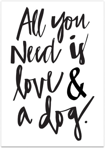 430x605 All You Need Is Love And A Dog Sold Out Fluffy Loves Dog
