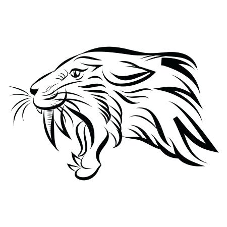450x450 Drawing Of A Saber Tooth Tiger Draw Saber Tooth Tiger Saber Tooth