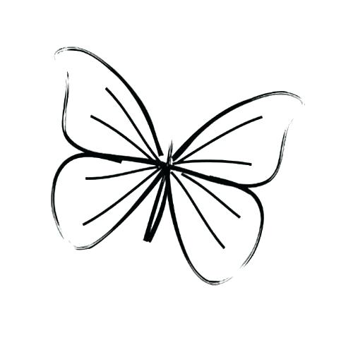 500x482 Drawing Of Butterfly Step