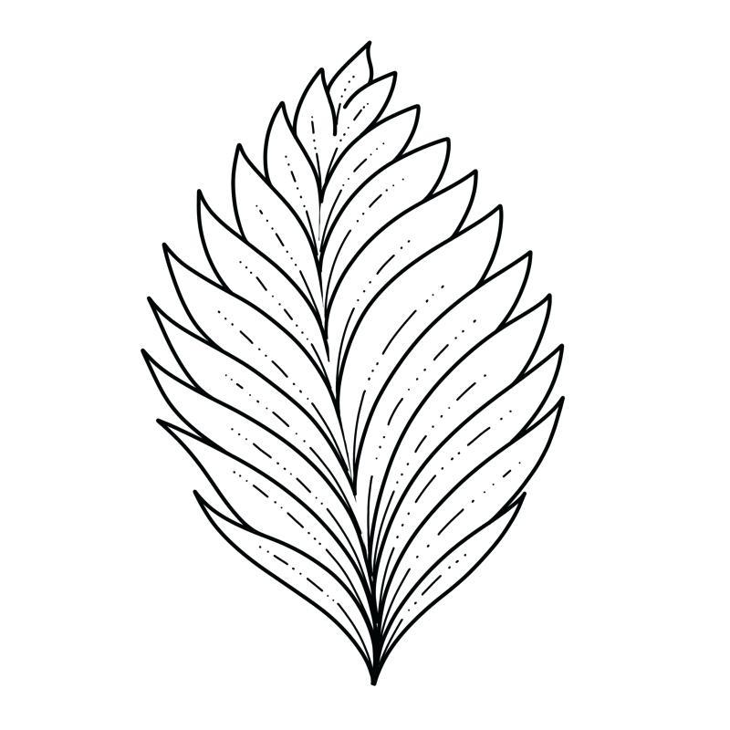 800x800 Drawing Of Leaf
