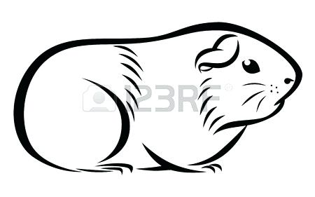 450x281 Drawings Of Guinea Pigs Hoteles
