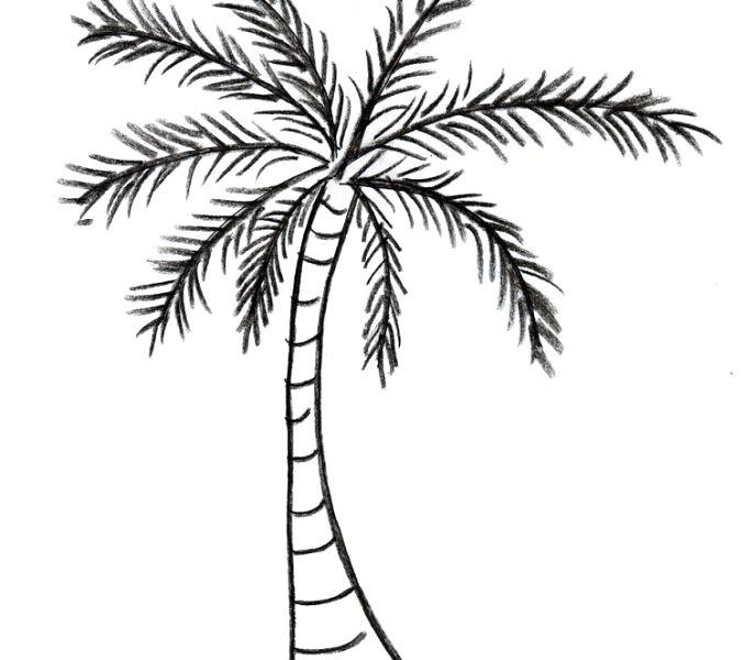 678x600 Simple Palm Tree Drawing