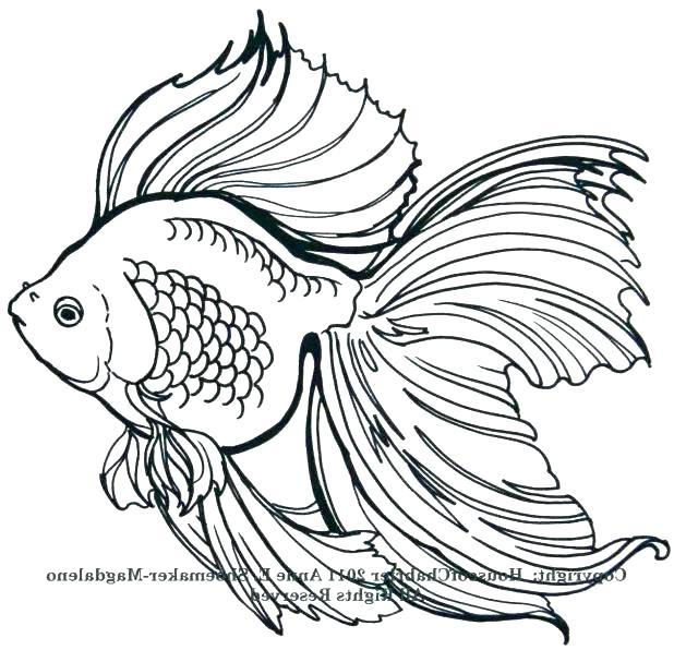 618x596 Drawings Of Cartoon Fish Fish Sketch Draw Cute Cartoon Fish