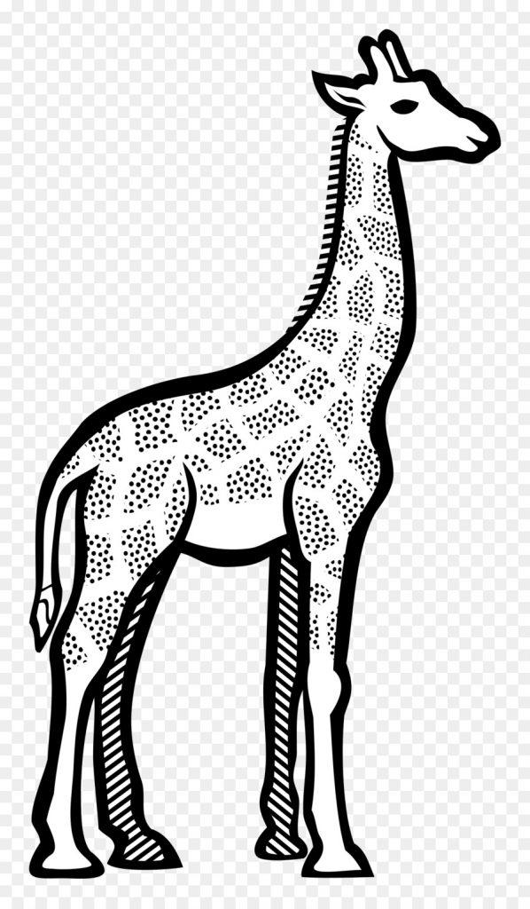 598x1024 Guaranteed Line Drawing Of A Giraffe Art Clip Png Download