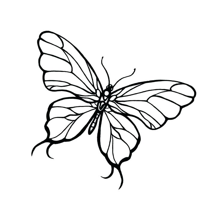 736x738 Drawings Of A Butterfly