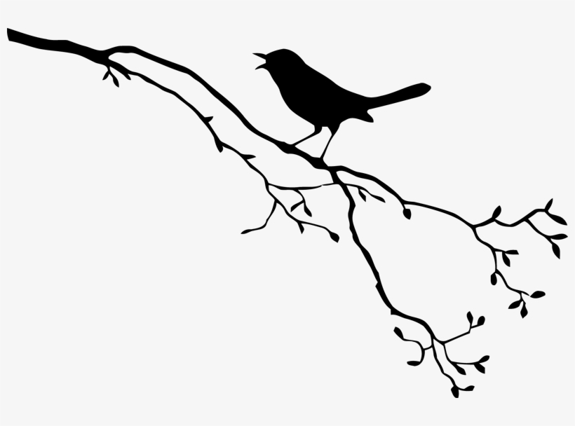 Drawing Of A Bird On A Branch Free Download Best Drawing