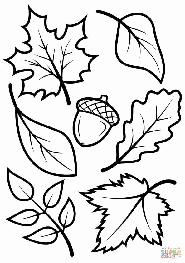 593x840 coloring book images flowers fresh pitbull coloring pages fresh
