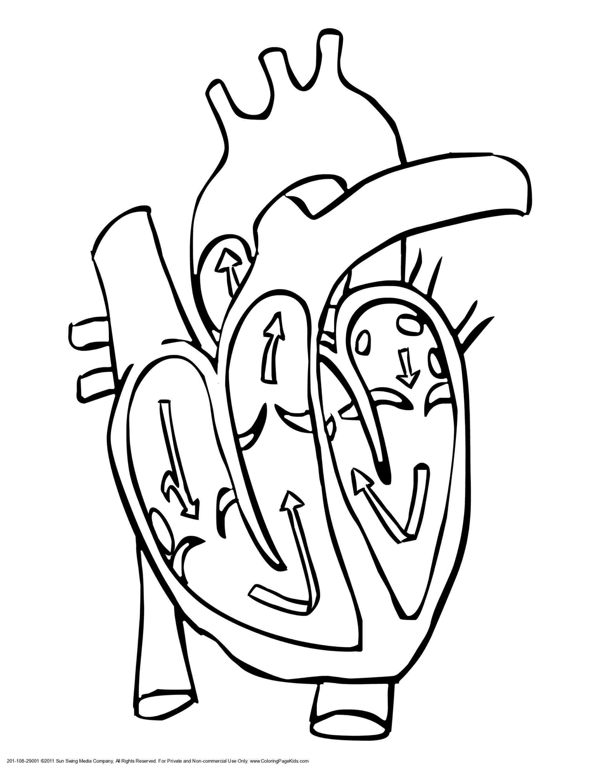 2014x2607 Human Heart Drawing With Labels