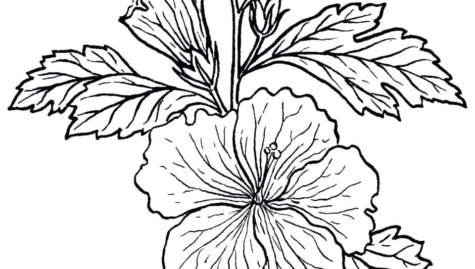 960x544 Rainforest Leaves Coloring Pages Best Plants Coloring